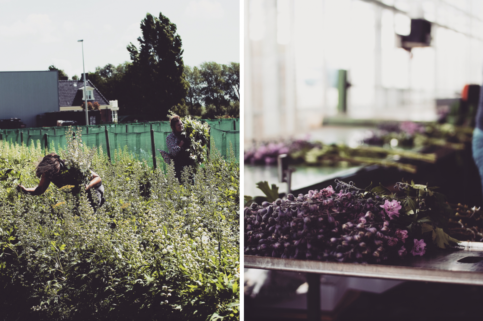 48 Hours In Amsterdam - Dahlia Factory