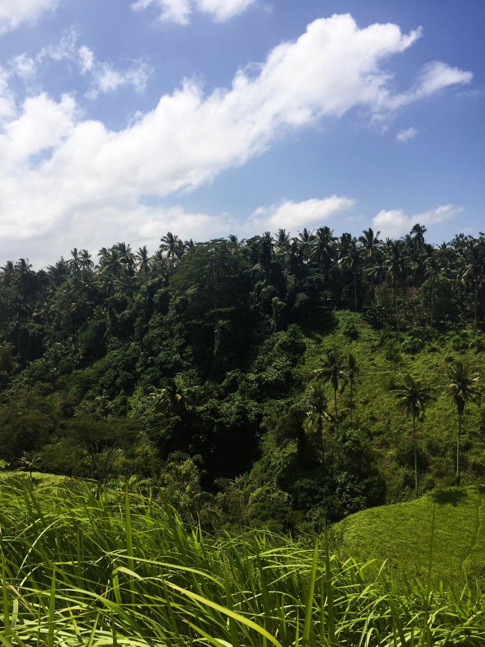 A Quick Guide To UBUD, Bali
