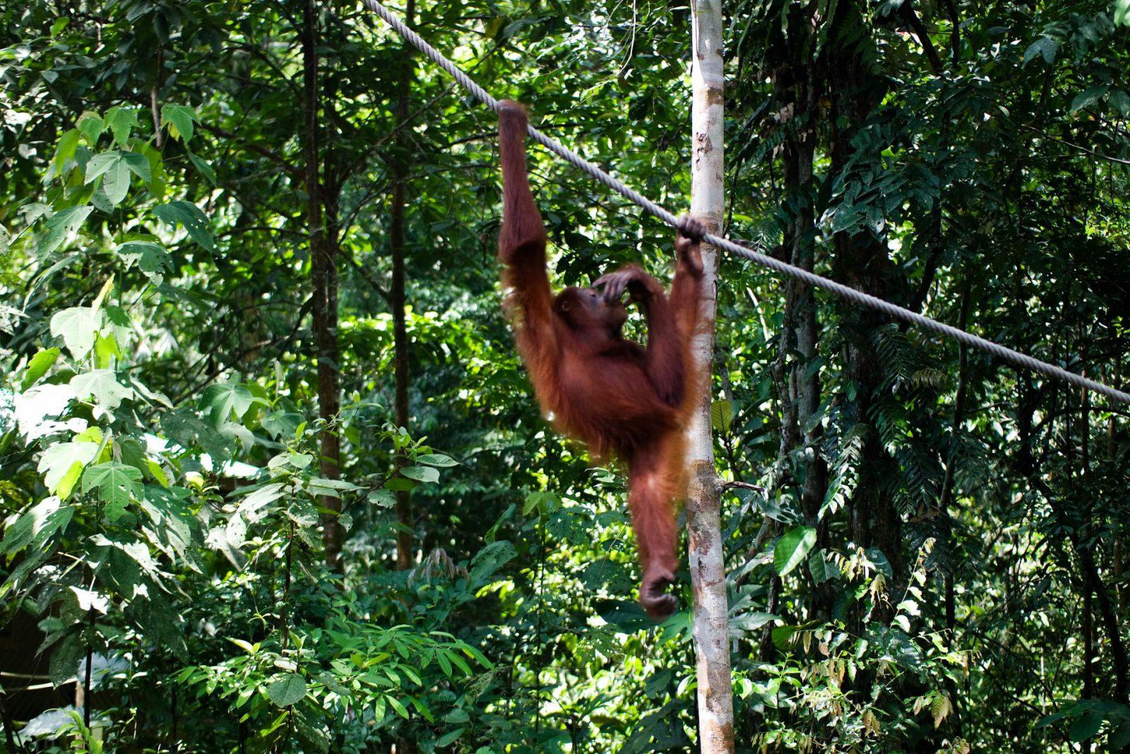Borneo Travel Diary