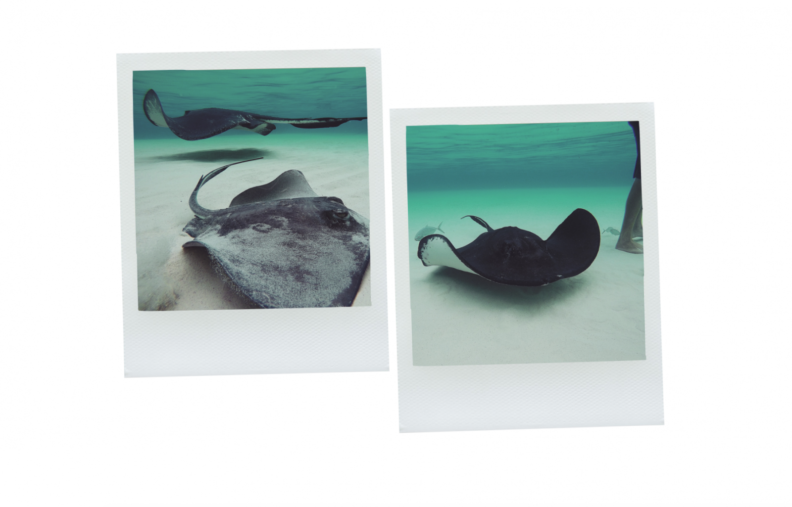 Cayman Islands - Stingray City Underwater Shots