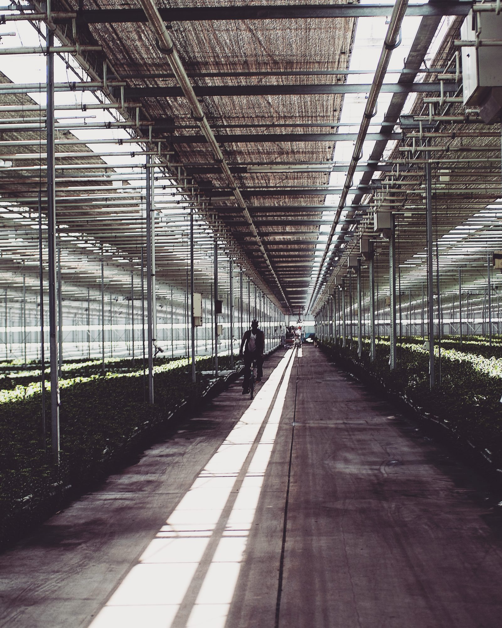 48 Hours In Amsterdam - Bloomon Greenhouse