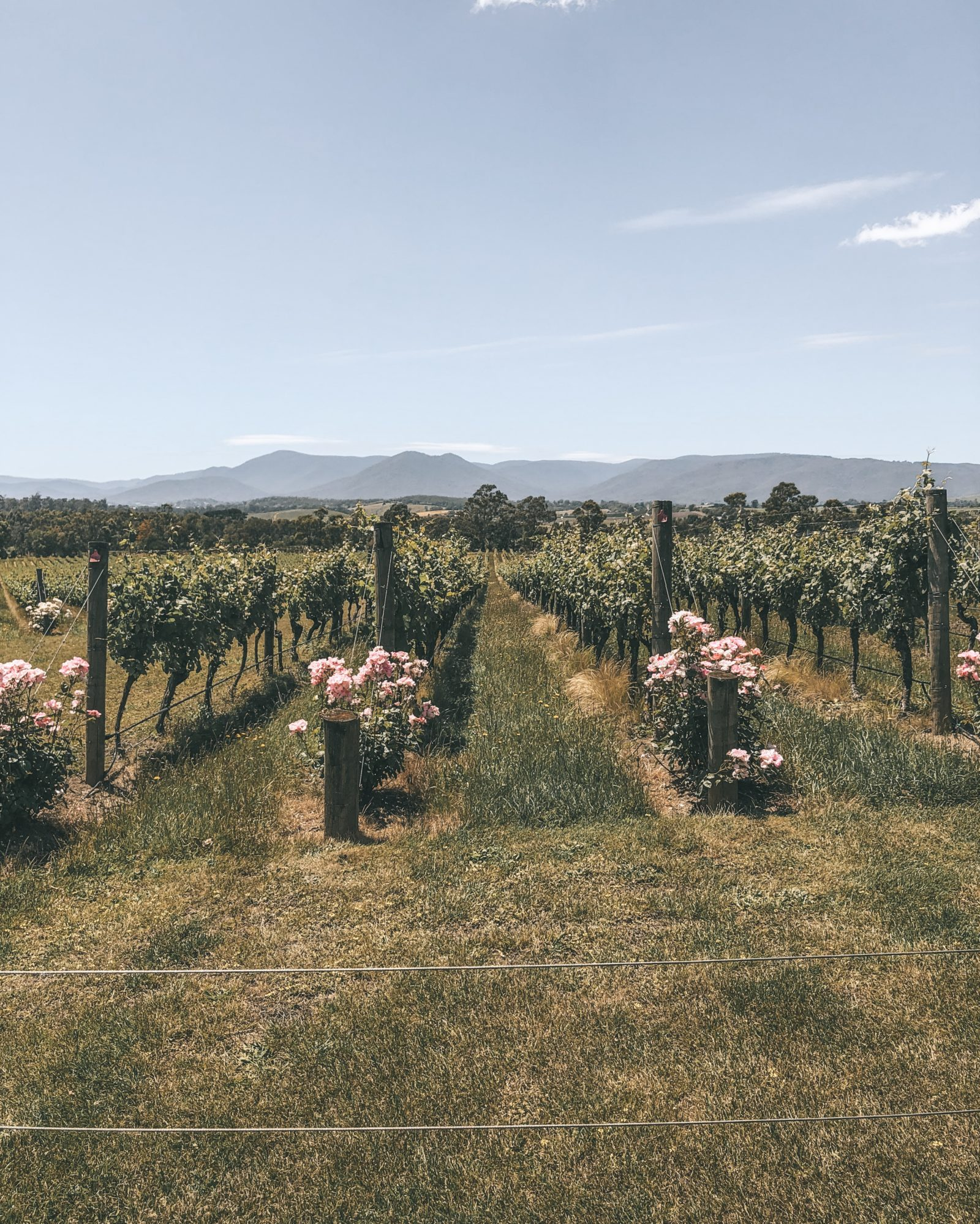 Honeymoon in Australia - Moet Chandon Vineyard